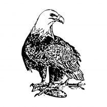 Adler Motivstempel